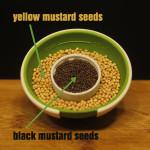 12best_spices_mustard_seeds_1