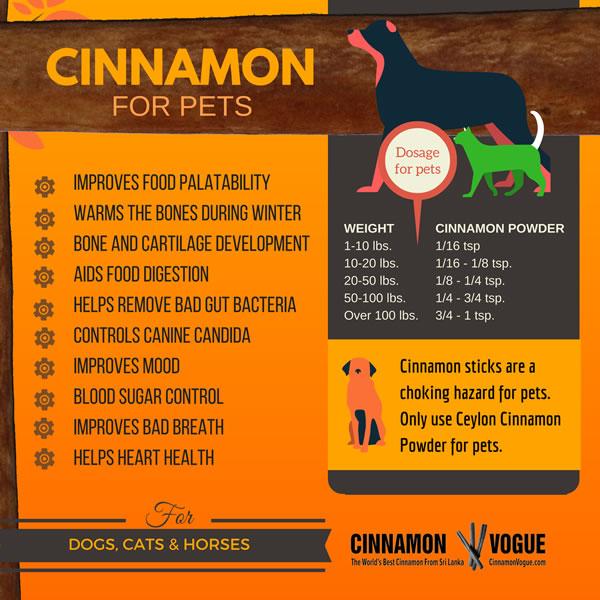 Cinnamon for pets-4