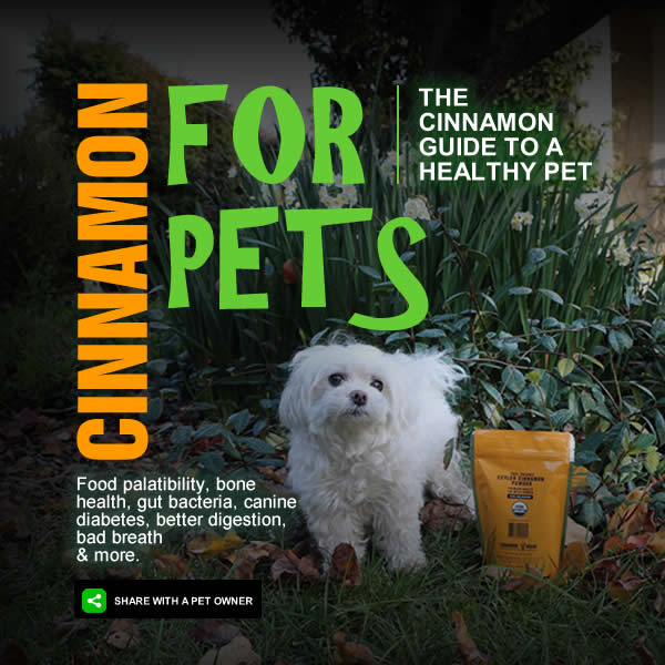 cinnamon_for_pets_1