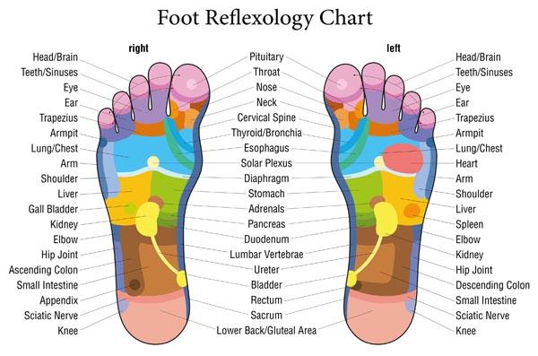 Foot Reflexology Colored Chart Description